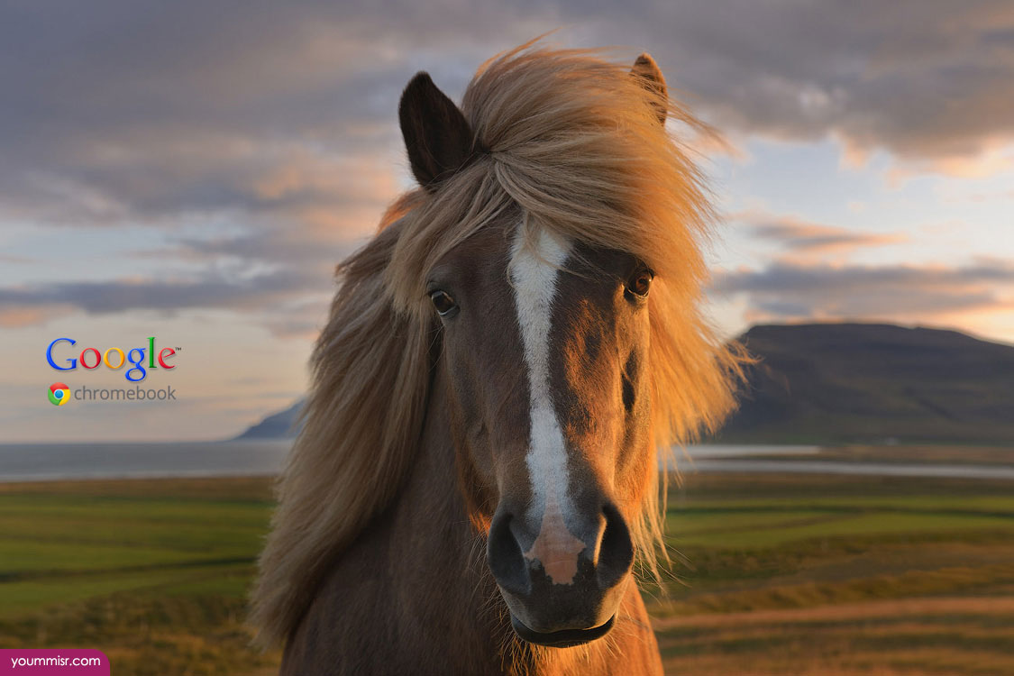 Wonderful Wallpaper Horse Chromebook - pictures-of-dream-horses-quotes-breeding-2015-9  Image_245232.jpg